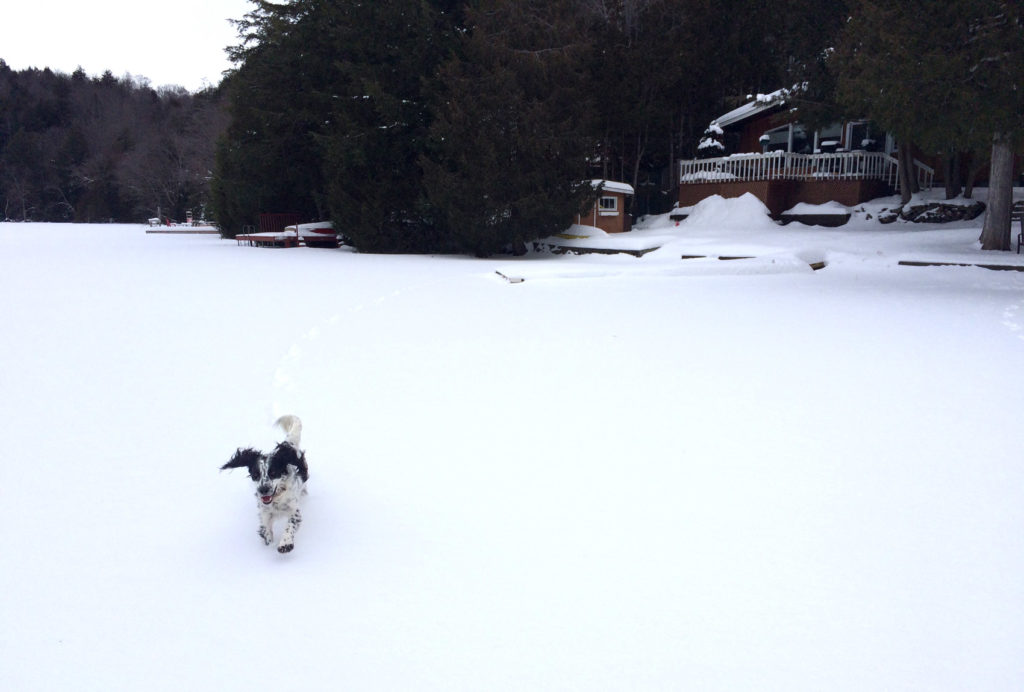 My dog Kenny running around on the frozen lake!