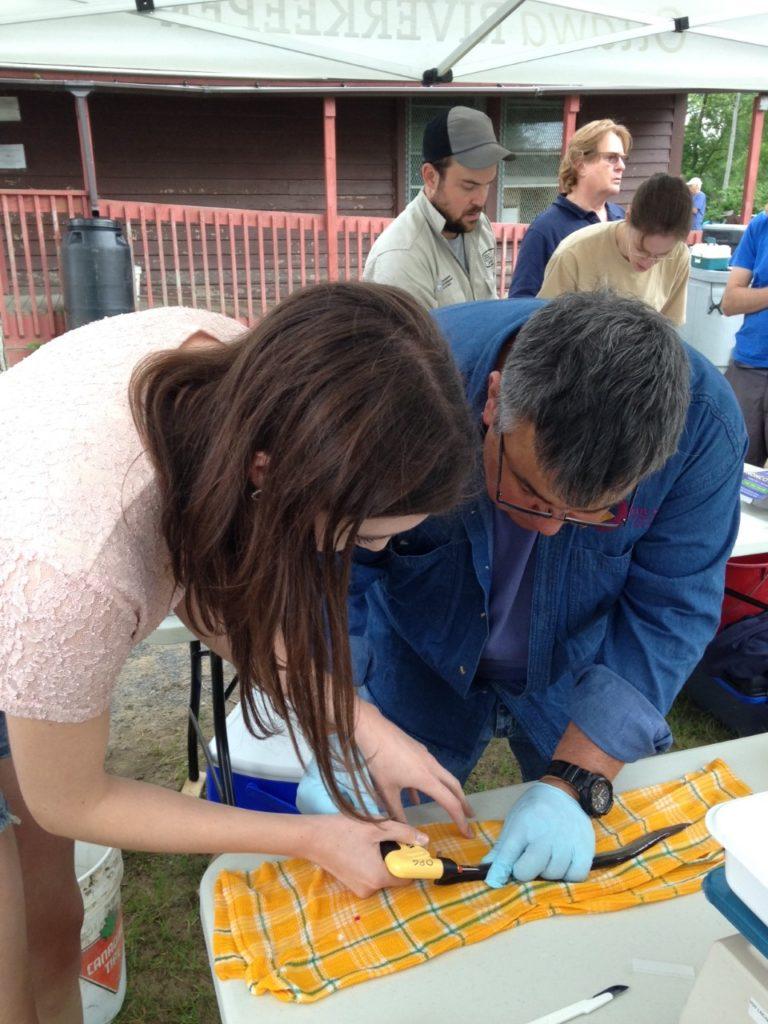 Kathleen tagging an eel.